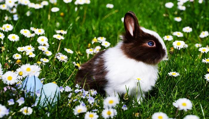 habitat kelinci di alam liar