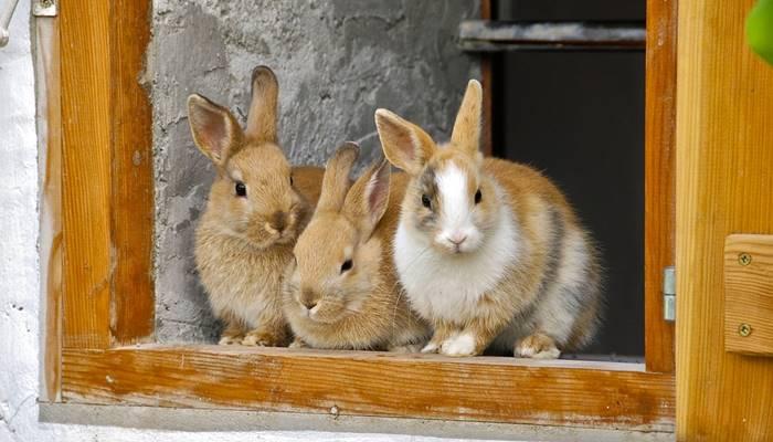 Jenis kelinci dan harganya