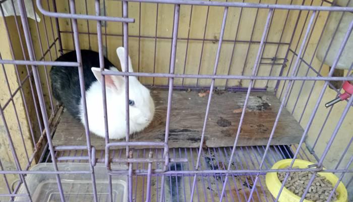 kandang kelinci dari besi